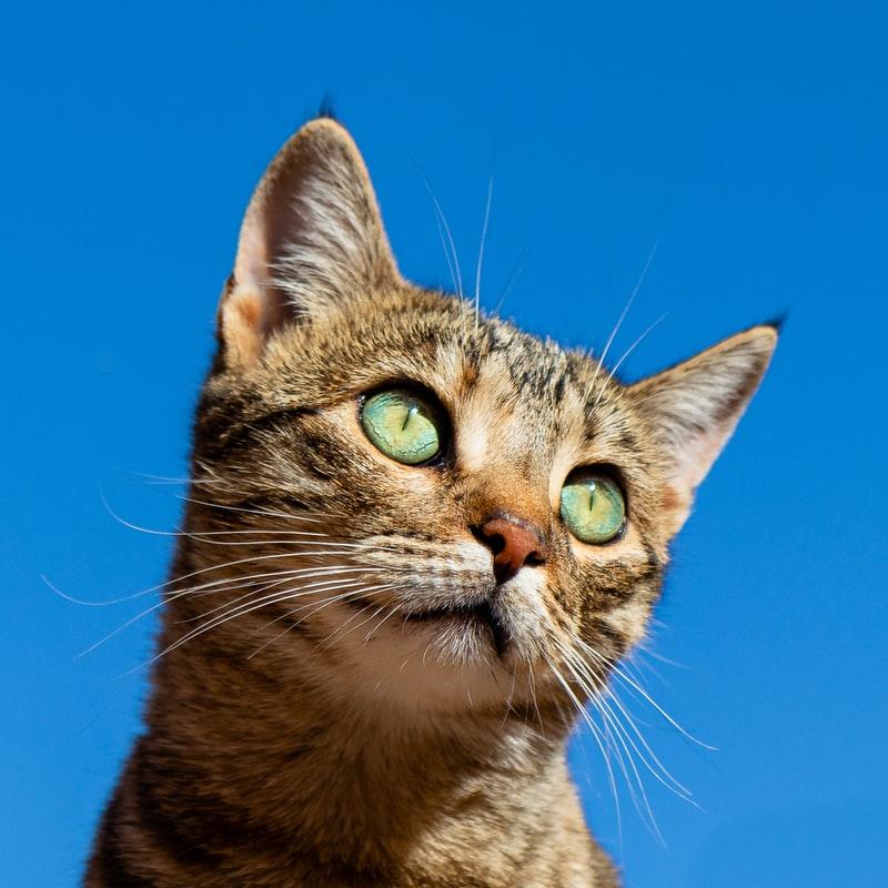 cat image numpy poisson